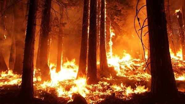 feu de forêt_2